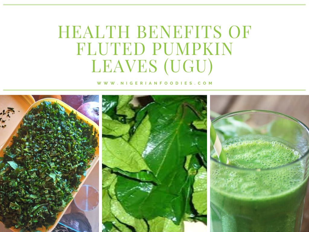 health benefits of fluted pumpkin leaves 2